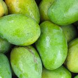Fresh Green Mangoes. Small oval fruits with yellow pulp Royalty Free Stock Images
