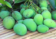 Fresh green mangoes Stock Image
