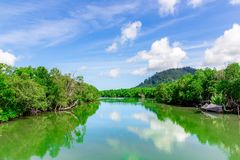 The fresh green mangrove forests in the river and beautiful clou. Ds in Phang Nga Province, Thailand Stock Photography