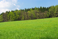 Fresh green meadow Royalty Free Stock Images
