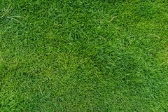 Free Fresh Green Meadow Grass Top View Stock Photography - 103375642