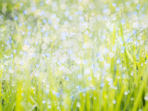 Fresh green meadow Royalty Free Stock Image