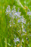 Fresh green meadow. With little white flowers Stock Photography
