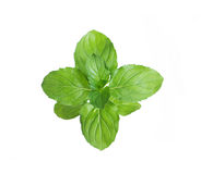 Fresh green mint. Isolated on white Stock Photography