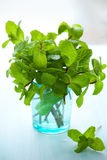 Fresh green mint Royalty Free Stock Image