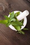 Fresh green mint Stock Photo