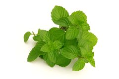 Fresh green mint Royalty Free Stock Photo