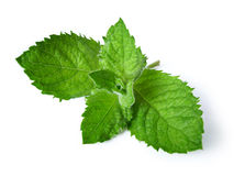 Fresh green mint. Isolated on white Royalty Free Stock Photo