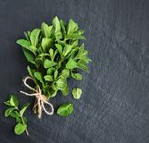 Green mint on a black board royalty free stock images