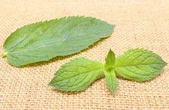 Fresh green mint on burlap texture Stock Photography