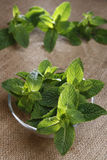 Fresh green mint on glass bowl Royalty Free Stock Image