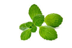 Fresh green mint herb Stock Images