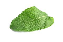 Fresh green mint leaf. On white background royalty free stock photo