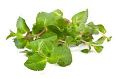 Fresh green mint leaves Royalty Free Stock Image