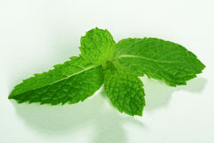 Fresh green mint leaves on white background Stock Photography