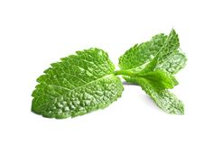 Fresh green mint leaves on white background. Fresh aromatic green mint leaves on white background Royalty Free Stock Photo