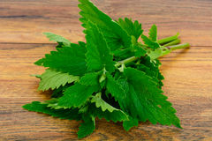 Fresh Green Mint, Lemon Balm Royalty Free Stock Photography