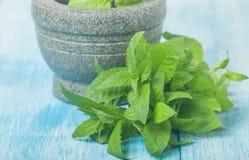 Fresh green mint in mortar Stock Photos