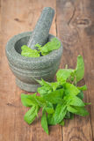 Fresh green mint in mortar Royalty Free Stock Photography