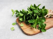 Fresh green mint stock images