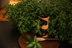 Fresh green mint organic leaves in the bush with mortar and pestle stock images