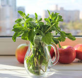 Fresh green mint in the sunlight in the morning. Fresh mint in glass jug and apple on the table in the sunlight in the morning Royalty Free Stock Photography