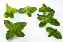 Fresh Green Mint Twigs On White Fabric Background Stock Photography