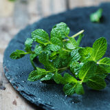 Fresh green mint Royalty Free Stock Photos
