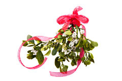 Fresh green mistletoe Royalty Free Stock Photo