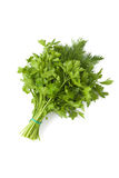 Fresh green mixed bunch of dill and parsley Royalty Free Stock Image
