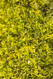Fresh green moss Stock Photo