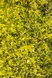 Fresh green moss Stock Photo