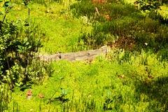 Fresh green moss Stock Image