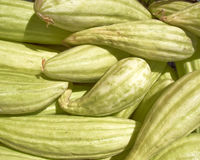 Fresh green muskmelons Stock Image