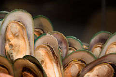 Fresh green mussel Stock Photography