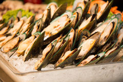 Fresh green mussel with ice Stock Photos