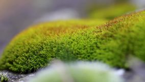 Fresh green natural moss stock footage