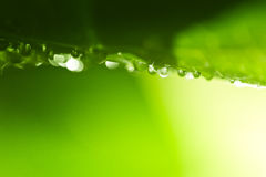 Fresh green nature background. Bright green leaf photo with water drops in the morning. Shallow depth of field Royalty Free Stock Images