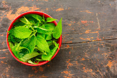 Fresh green nettle leaves in a red bowl Stock Photo