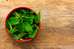Fresh green nettle leaves in a red bowl Royalty Free Stock Photos