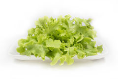 Fresh green oak lettuce salad on white background Royalty Free Stock Photos