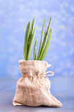 Fresh green onion in bag Royalty Free Stock Photography