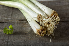 Fresh green onion Royalty Free Stock Photo