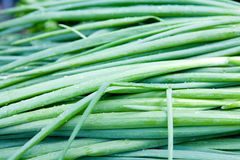 Fresh green onions Stock Photos
