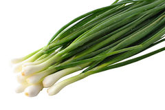 The fresh green onions Stock Images