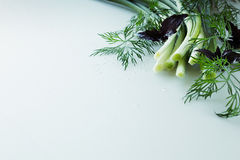 Fresh green onions, basil and dill on a white background.  Frame with the copy space. Stock Photos