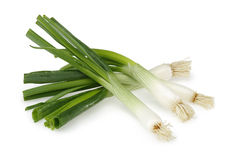 Fresh green onions Stock Image