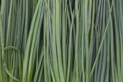Fresh Green onions close up. Green background fresh onions. Striped green background stock photo
