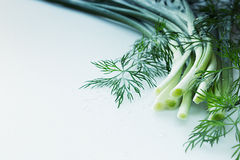 Fresh green onions and dill on a white background.  Frame with the copy space. Stock Image