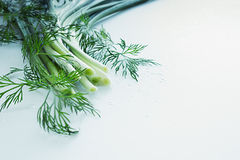 Fresh green onions and dill on a white background.  Frame with the copy space. Royalty Free Stock Images